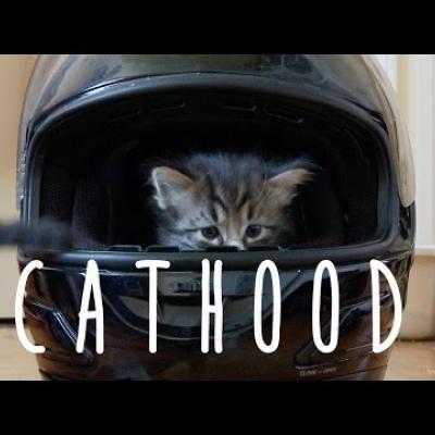 Διασκεδαστική παρωδία του «Boyhood» με γάτες